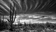Saguaro Framed Prints - The Desert in Black and White Framed Print by Saija  Lehtonen