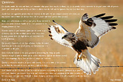Desiderata Posters - The Desiderata with Hawk Poster by Greg Norrell