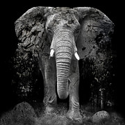 Erik Brede - The Disappearance of the...