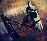 Thoroughbred Gelding Prints - The Draft Print by Lyndsey Warren