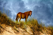 Sea Oats Metal Prints - The Dune King Metal Print by East Coast Barrier Islands Betsy A Cutler