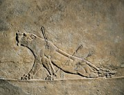 Iraq Prints - The Dying Lion. Ca.  645 Bc. Panel Print by Everett