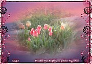 Annette Abbott Prints - The elagance of Spring Print by Annette Abbott