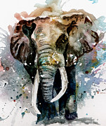 Tusk Painting Posters - The Elephant Poster by Steven Ponsford