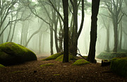 Nature Photos - The elf world by Jorge Maia