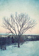 Winter Scene Photo Prints - The Elm in Winter Print by Kay Pickens