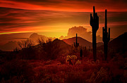 Sonoran Desert Prints - The Essence of the Southwest Print by Saija  Lehtonen