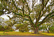 Oak Alley Plantation Photo Prints - The Essence Print by Steve Harrington