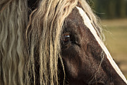 Forelock Photos - The Eye D4849 by Wes and Dotty Weber