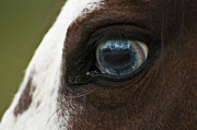 Horse Photography Prints - The Eye - Horse Photos Print by Laria Saunders