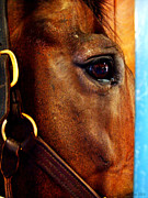 Kentucky Horse Park Photo Prints - The Eye of a Champion DA Hoss Print by Deborah Fay