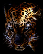 Bobcat Drawing Prints - The Eye of the Leopard  Print by Athena Mckinzie