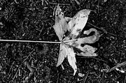 Brandon Hussey - The Fallen Leaf