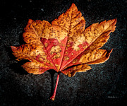 Red Fallen Leave Photo Posters - The Fallen Poster by Mitch Shindelbower