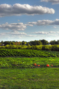 New England Farm Photos - The Farm by Joann Vitali