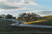 Roger Mullenhour - The Fence and The Oak Trees