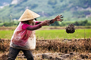 Vietnam Prints - The Fields of Nha Trang Print by Nicole S Young