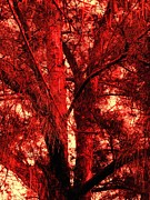 Debb Starr - The Fiery Glowing Tree