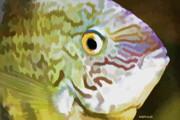 Deborah Benoit - The Fish