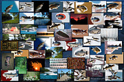 Boating Digital Art - The Fishing Hole Collage Rectangle by Thomas Woolworth