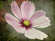Angela Doelling AD DESIGN Photo and PhotoArt - The Flower