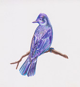 Flycatcher Drawings Prints - The Flycatcher Print by Hilary Colon