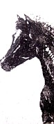 Printmaking Originals - The Foal by Susan Cartwright