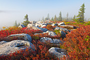 Bear Rocks Posters - The Fog Clears at Dolly Sods Poster by Bill Swindaman