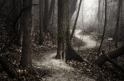 Monochrome Prints - The Foggy Path Print by Scott Norris