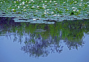 The Forest Beneath The Lilypads Print by Jean Hall