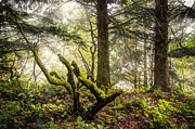 Fall River Scenes Prints - The Forest Print by Debra and Dave Vanderlaan