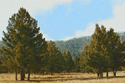 The Hills Digital Art Framed Prints - The Forest Framed Print by Ernie Echols