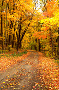 Indiana Scenes Photos - The Forest Road by Jim McCain