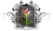 The Framed Rose Print by Mauro Celotti