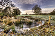 Frost Photos - the  Frosty Field  by Rob Hawkins