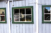 Rural America Framed Prints - The Gallery - Rural America Framed Print by Steven  Digman