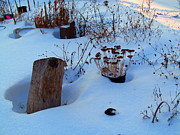 Winter Roads Photos - The Garden In Wintertime by Tina M Wenger