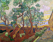 St Remy Posters - The Garden of St Pauls Hospital at St. Remy Poster by Vincent Van Gogh