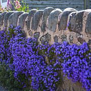 Square_format - The Garden Wall by Heiko Koehrer-Wagner