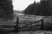 Lawrence Christopher Metal Prints - The Gate in black and white Metal Print by Lawrence Christopher