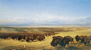 The American Buffalo Art - The Gathering of the Herd by William Jacob Hays