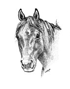 Horse Drawing Framed Prints - The Gentle Eye Framed Print by Renee Forth Fukumoto