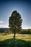 Nathan Larson - The Giving Tree