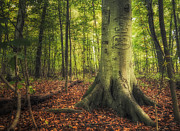 Autumn Woods Prints - The Giving Tree Print by Scott Norris
