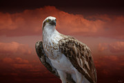 Inspirational Digital Art - The Glory of an Eagle by Holly Kempe