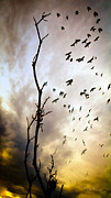 Bird Photograph Prints - The Gods Laugh When The Winter Crows Fly Print by Bob Orsillo