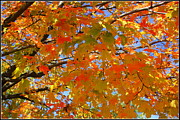 The Golden Leaves Of Autumn Print by  Photographic Art and Design by Dora Sofia Caputo