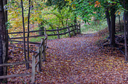 Split Rail Fence Prints - The Golden Path   7D07627 Print by Guy Whiteley