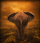 Elephant Digital Art Posters - The Golden Savanna Poster by Lynn Jackson
