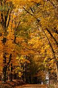 Linda Knorr Shafer - The Golden Wooded Road